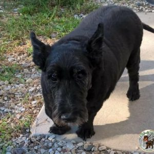 Gratouille Refuge - Ficelle A Adopter