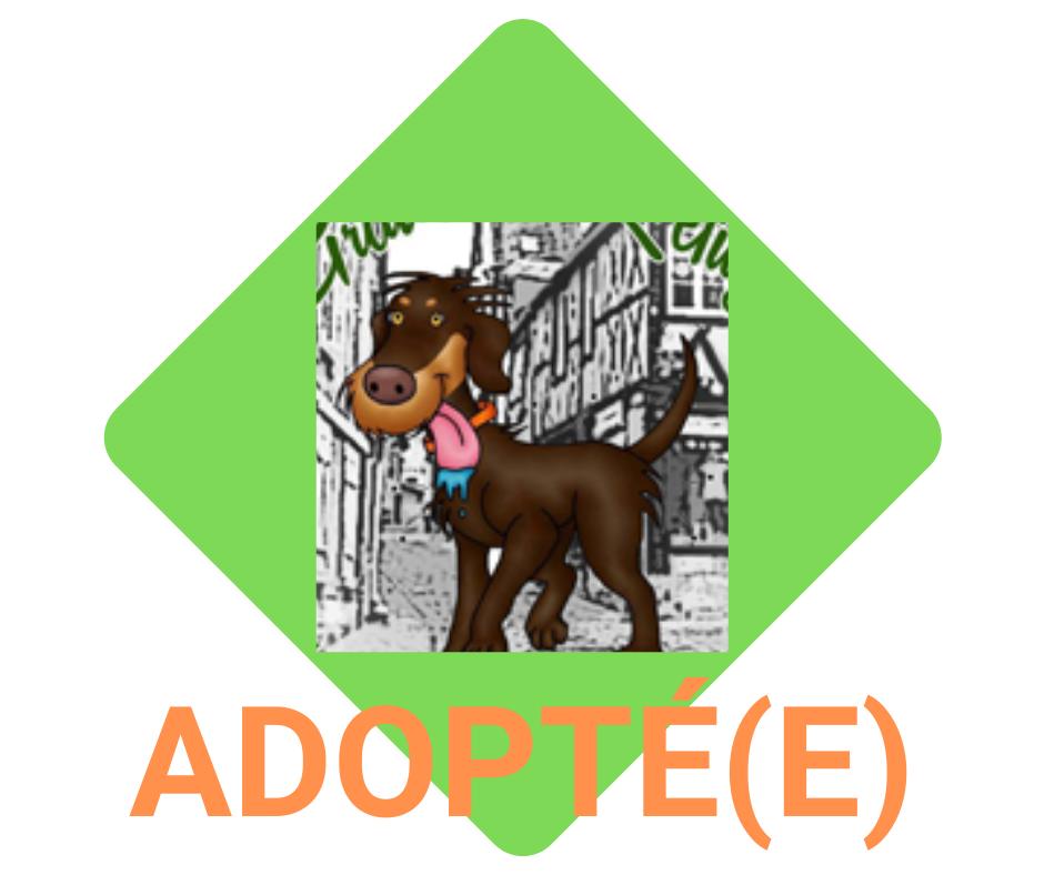 loulous adoptés
